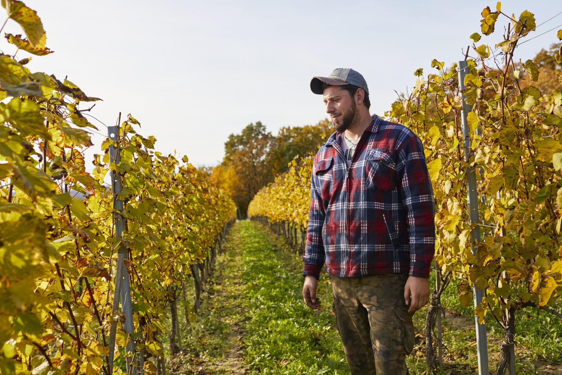 Fotografia portretowa pracownika winnicy